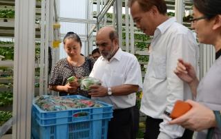 Director General FAO Sky Greens Visit