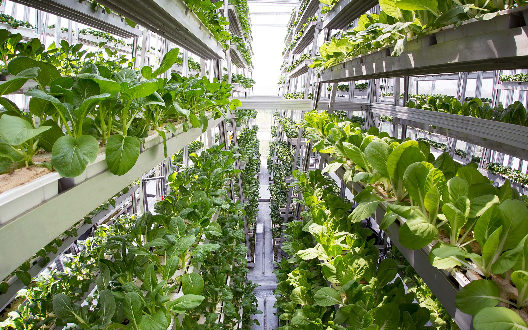 Sky Greens, Singapore | Vertical Farming For Compact Spaces | Types of Farming